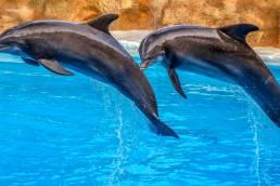 La sincronización con el aula es posible hasta el punto de parecer delfines en el mar